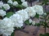 Pic_0029